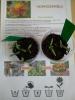 У рамках місячника екологічного виховання, оголошеного Управлінням освіти Бахмутської міської ради, учні 5-Б класу Бахмутської школи №10 розпочали роботу над довготривалим проектом «Від насіння до квітки».